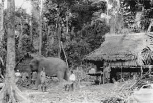 Elefanten_Andamanen
